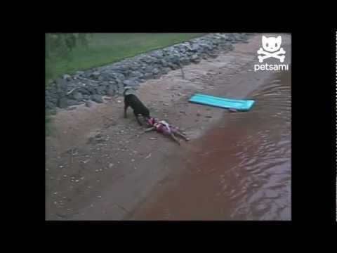 Dog saves boy from drowning