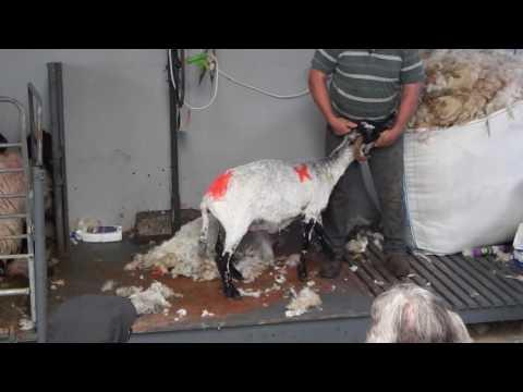 Kissane Sheep Farm 01
