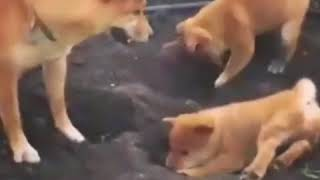 dog so cute funny moment