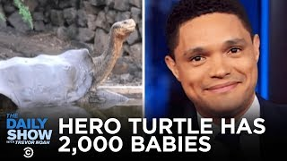 Diego the Tortoise Retires After Helping to Reproduce 2,000+ Baby Tortoises | The Daily Show