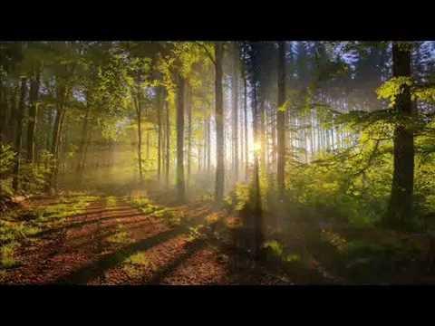 Веня Дркин - Как прекрасен этот мир