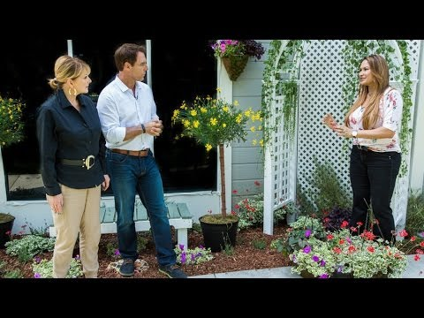 Home & Family - Shirley Bovshow's Tips on Growing a Garden in a Small Space