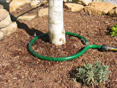 Save And Conserve Water With Trickle Drip Irrigation Youtube