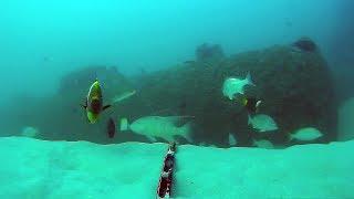Underwater in Moreton Bay - Curtin Artificial Reef 2
