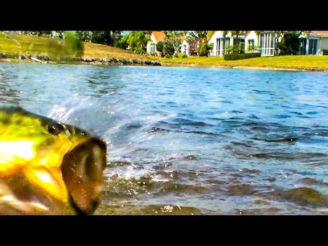 Freshwater - Fishing for Bass Spinning # 01 - West Palm Beach Florida - HD # 14 - Daniel Pierlet