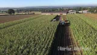 Récolte densilage Maïs avec lensileuse Fendt KATANA 65