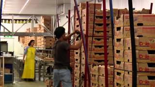The Source Live | Dole Food Company - Costa Rica