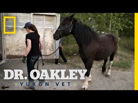 Horse Acupuncture | Dr. Oakley, Yukon Vet