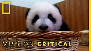 Panda Babies - Preview | Mission Critical