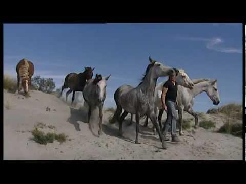 Жан Франсуа Пиньон и его свободные лошади. На пляже..VOB