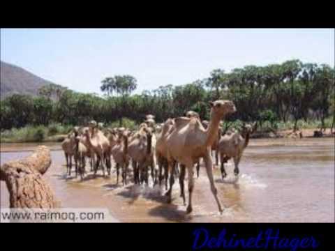 Eritrea- Tigre Song, Saied Abdala- ''selem Wo Jelb Mereit'' video