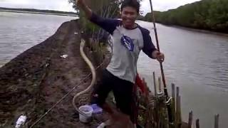 Wow!! Mancing ikan dapat ular, seru!!