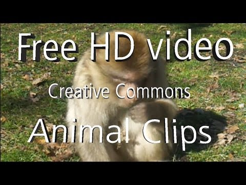 Animal Clips - Hd 1080p - Free To Reuse (creative Commons Licence) - Ccfootage video