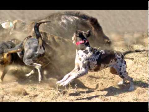 Hunting Dogs Tribute