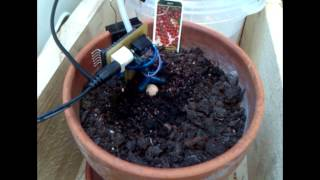 Arduino plant watering prototype test + time lapse growing.