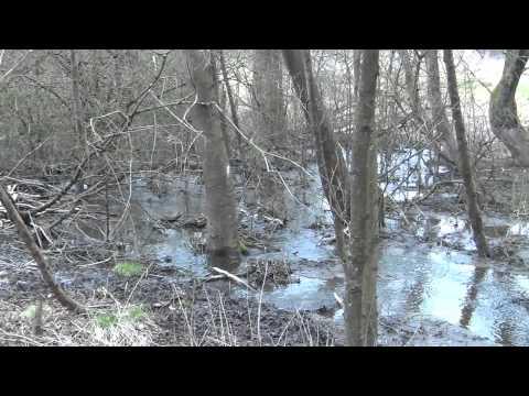 Bever burchten en dammen