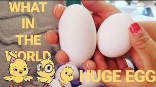 Realistic Day In the Life   Laundry   Do we have a baby chick in our eggs   JuneMas Day 14