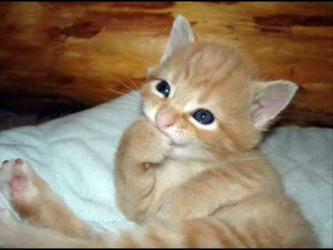 fotos chistosas de bebes, gatos y perros