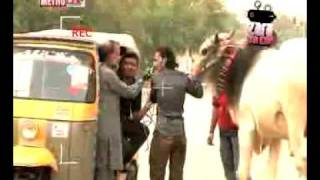 Zara Hut Kay cow in rakshaw