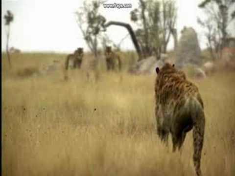 Smilodon is listed (or ranked) 50 on the list The Top 100 Weirdest, Most Amazing Creatures Ever On Earth