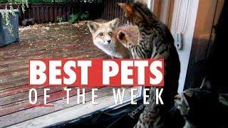 Best Pets of the Week | October 2017 Week 3