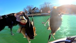 FAT Winter Bass DESTROY our Favorite Baits!!! (Tournament Pre-Fishing)