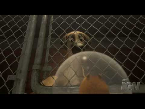 Mom and son search for pet in dog shelter Stock Video