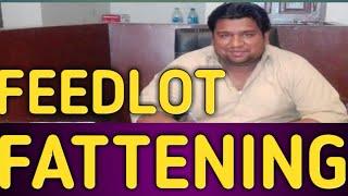 Feedlot Fattening - Vachay Kattay