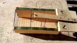Live Rat Trap From Turkey Rats. CANLI FARE YAKALAMA KAPANI KLASİK MODEL FARE KAPANI SADECE 8 TL