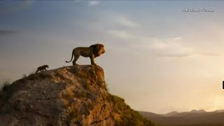 Conservationists sound alarm about declining lion population ahead of 'Lion King' remake
