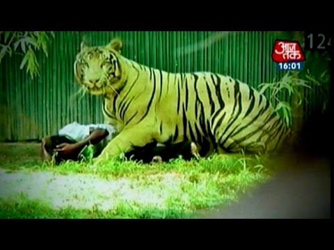 White tiger kills youth in Delhi zoo