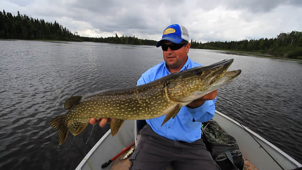 ontario fly in fishing adventure youtube
