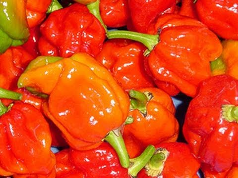 HOTTEST PEPPERS IN THE WORLD! -- BOAT #8