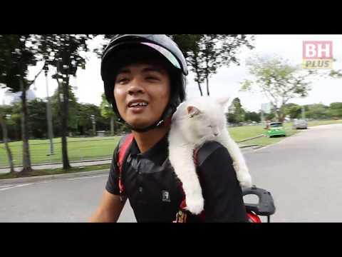 BHPLUS: Fluffy kucing yang suka membonceng motosikal
