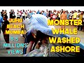 29th Jan '16 Monster Whale Fish washed ashore at Juhu Beach M...