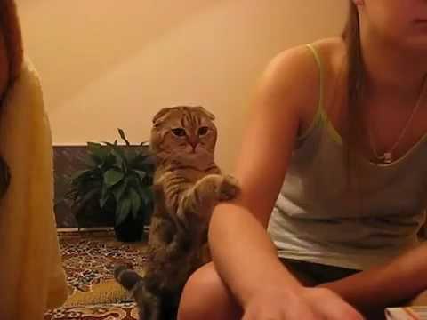 Gatto in cerca di coccole alle prese con una padroncina che si concede troppe pause