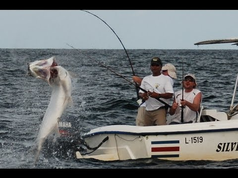 Huge Tarpon at Silver King Lodge-Costa Rica