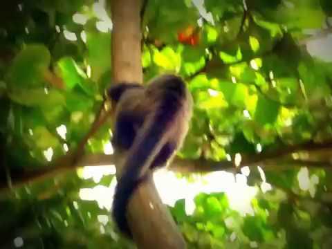 Macaco Prego - Cidade das Crianças - Presidente Prudente
