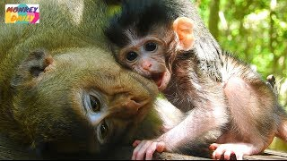 Kidnapper leave newborn free to play really cute but so sorry baby starve milk alot|Monkey Daily 787