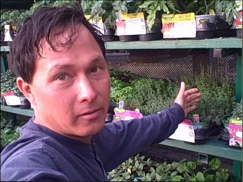 How to Save 48%+ on Vegetable Plant Starts & Seeds to Grow a Garden Today