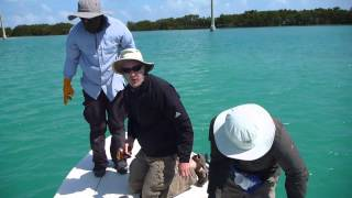 Sawfish battle in Islamorada 3