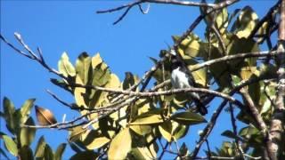 Cerrado Protected Areas: Chapada dos Veadeiros and Emas National Parks