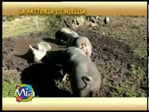 La Fattoria di Mielisa ci parla del MAIALE a MIA Mondo Intorno agli Animali