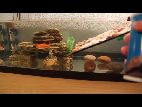 Peces y tortugas conviviendo juntos