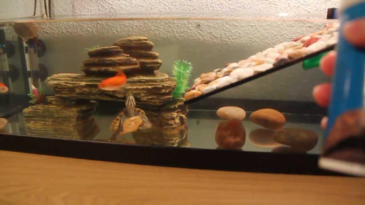 Peces y tortugas conviviendo juntos youtube - Pecera de pared ...