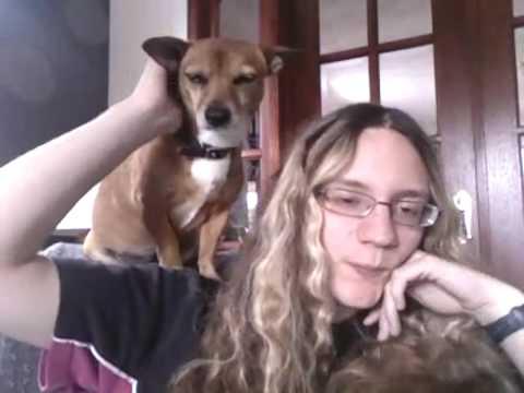 仲がいい人間と犬