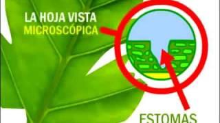 la fotosintesis de la planta