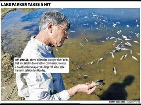 Fish Kill - Lake Parker - Lakeland FL - Feb 2009
