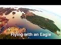 Racing Drone flying with Eagles above my house
