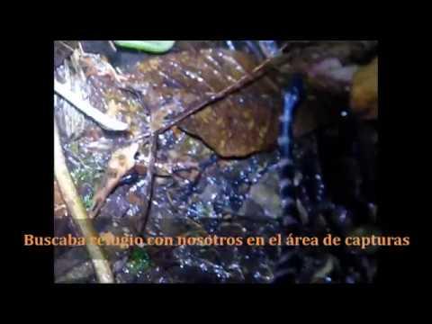 Insectos del Biotopo del Quetzal, B.V. Guatemala